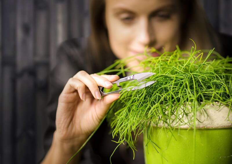 Mini növény nyeső olló