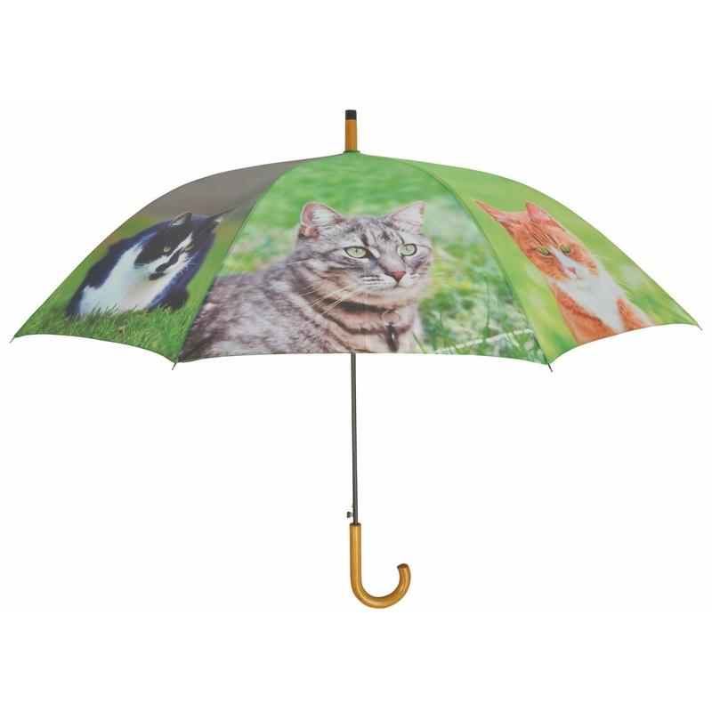 Cicás esernyő