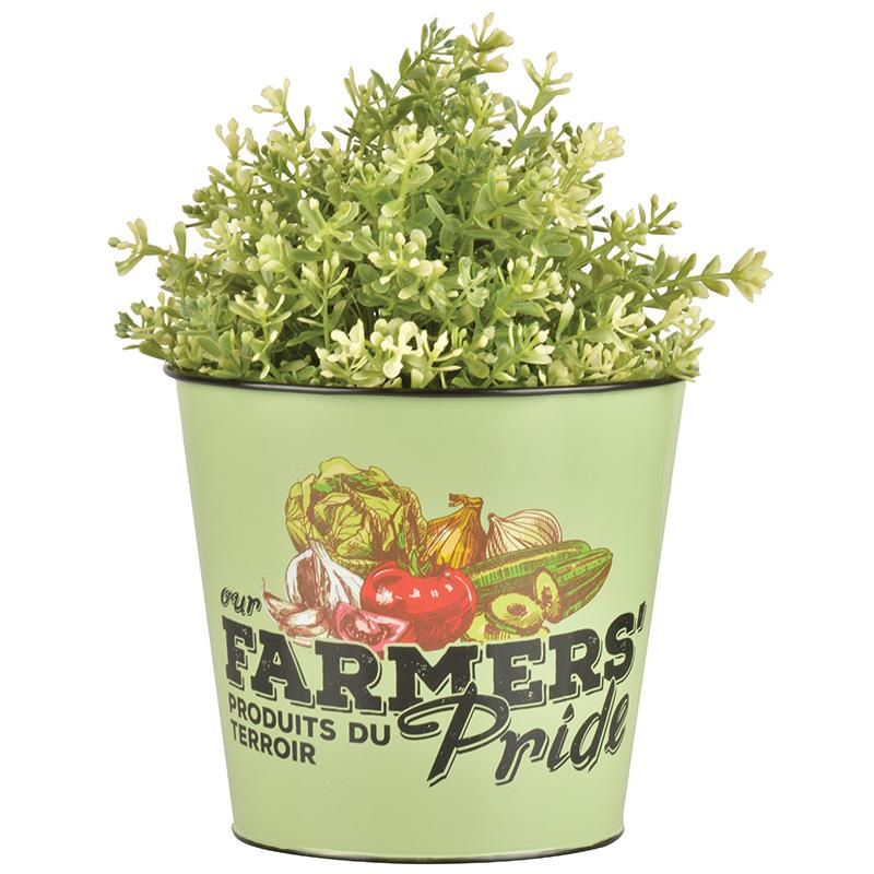 Farmers` pride virágcserép