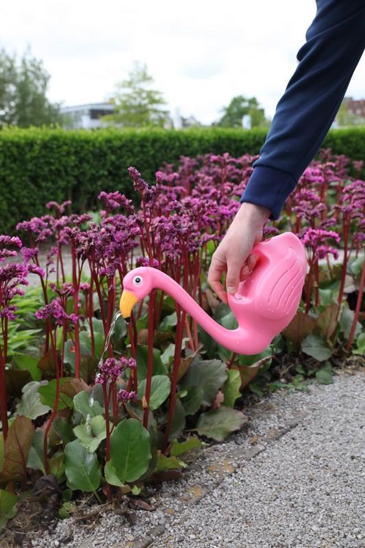 Flamingós locsolókanna