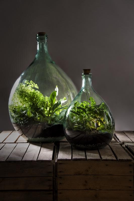 Florárium DIY szett, 5 literes