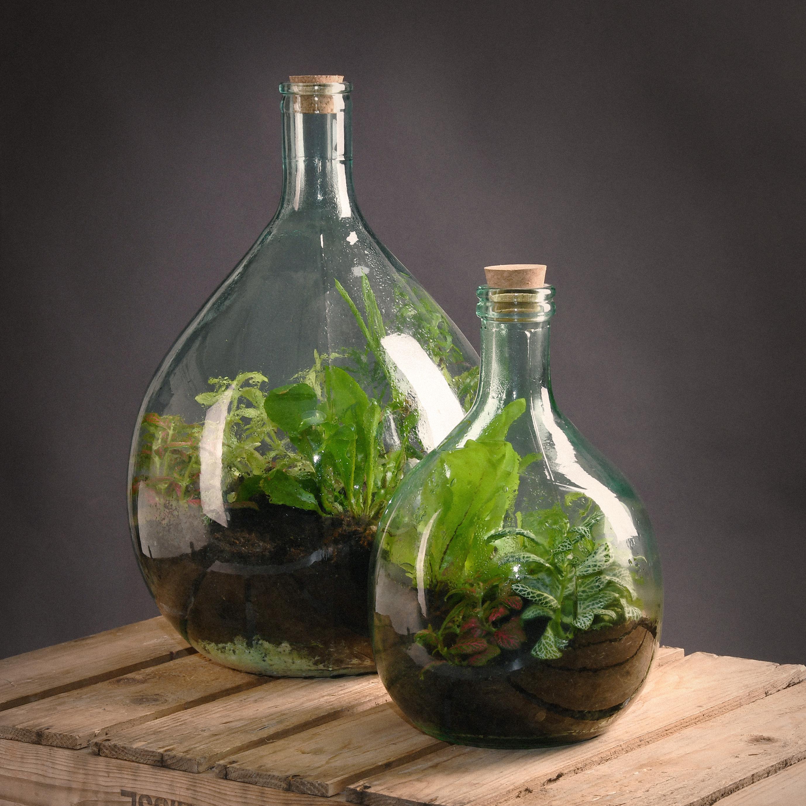 Florárium eszközökkel, 5l literes