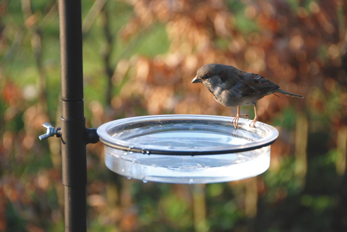 Leszúrható madáretető