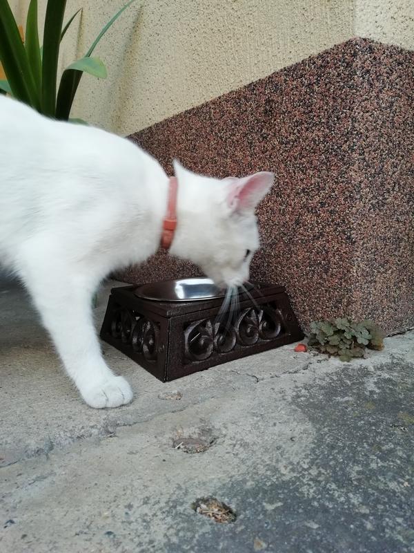 Macskatál