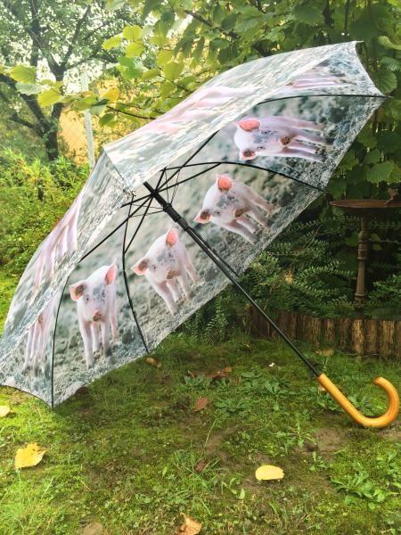 Malacos esernyő