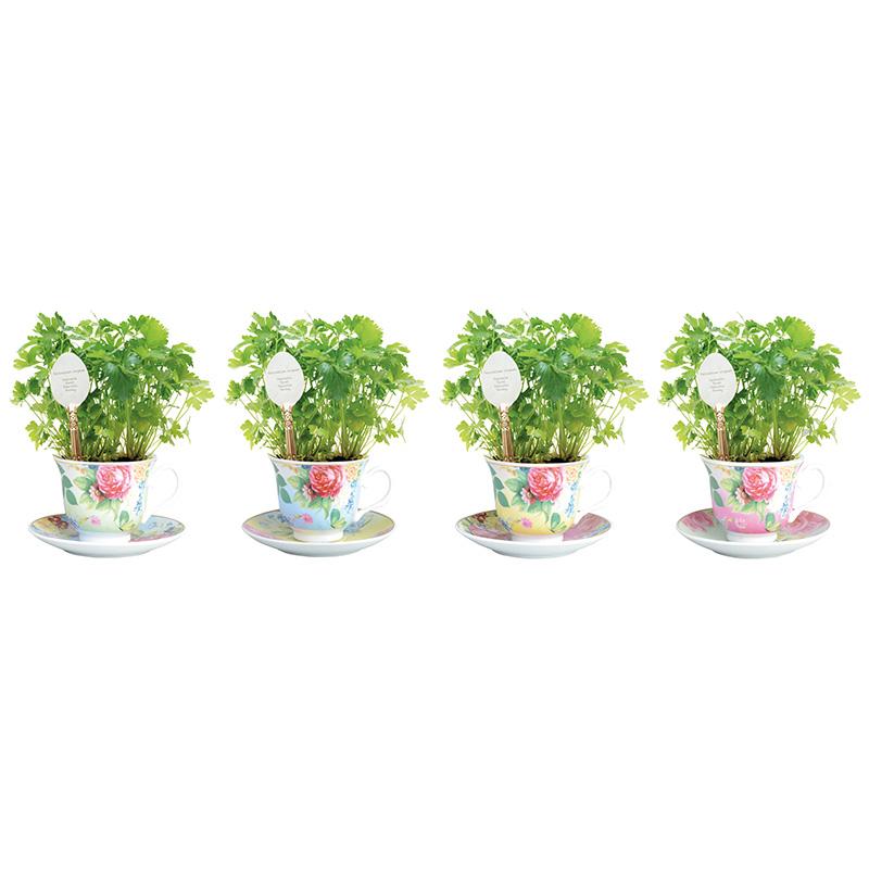 Növény termesztő szett, petrezselyem