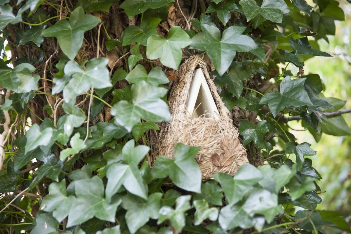 Növénybevonatos madárház