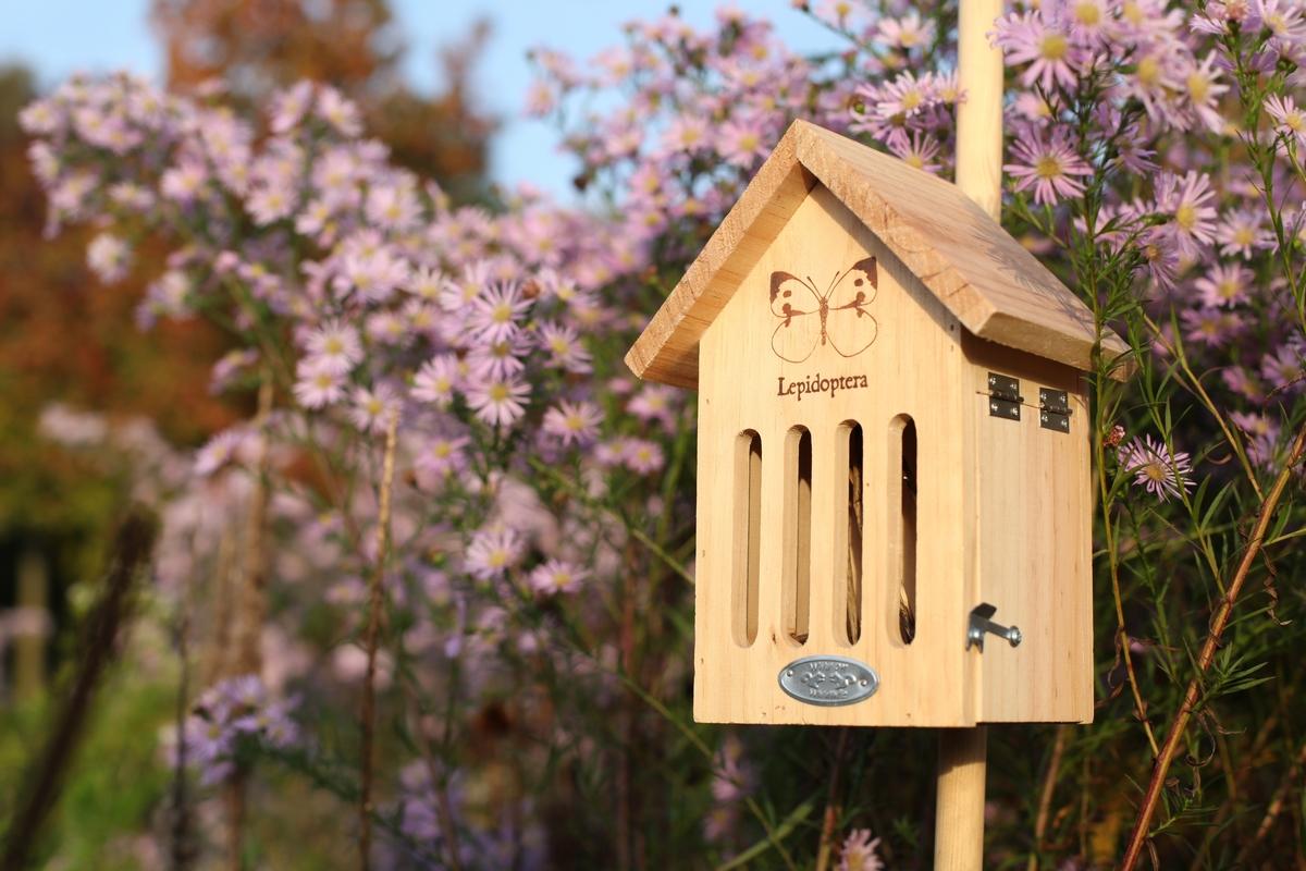 Pillangó ház pillangó mintával