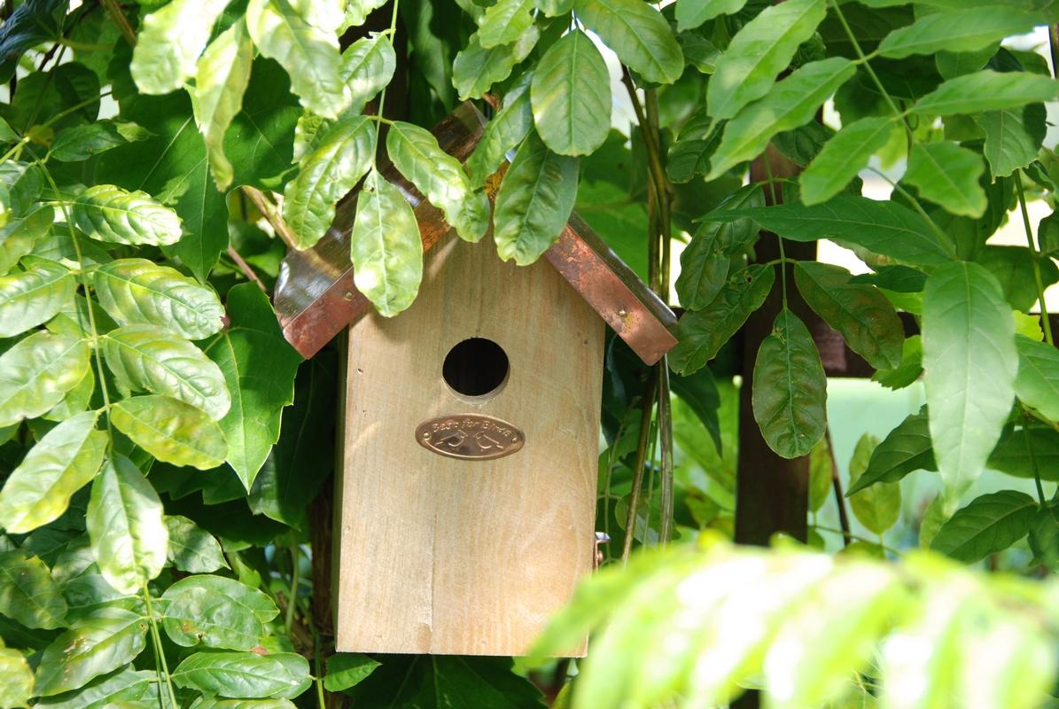 Rézlemezes madárház ökörszemnek