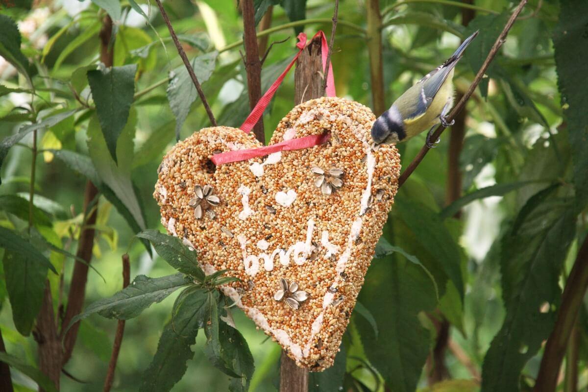 Szív formájú madáreleség