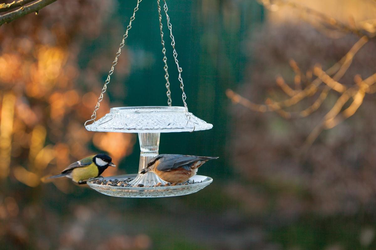 Üveg madáretető