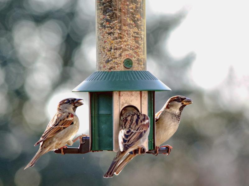 Az őszi és téli madáretetés titkai