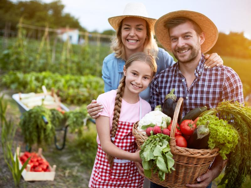Friss zöldségek és fűszernövények - Tavaszi magaságyás 2. rész